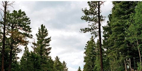 Road, Road surface, Asphalt, Thoroughfare, Evergreen, Tar, Conifer, Temperate coniferous forest, Larch, Temperate broadleaf and mixed forest,
