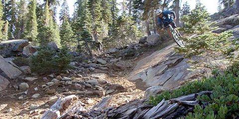 Wood, Plant community, Mountain biking, Mountain bike, Downhill mountain biking, Bedrock, Soil, Rock, Trail, Forest,