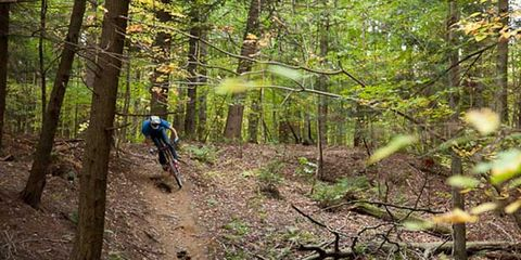 Natural environment, Mountain biking, Downhill mountain biking, Tree, Plant community, Forest, Mountain bike, Soil, Trail, Old-growth forest,