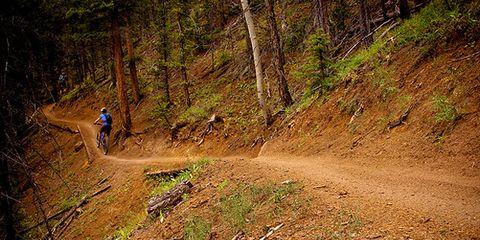 Soil, Trail, Mountain biking, Slope, Forest, Dirt road, Downhill mountain biking, Freeride, Cycle sport, Mountain bike,
