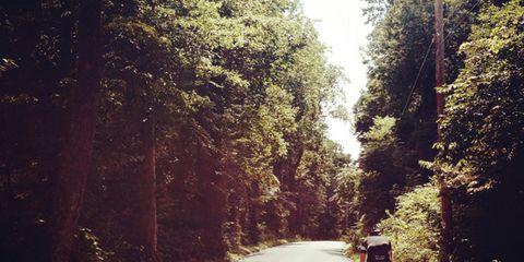 Road, Sunlight, Road cycling, Asphalt, Bicycle wheel, Thoroughfare, Trail, Bicycle, Shrub, Bicycle frame,