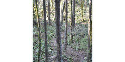 Vegetation, Nature, Natural environment, Plant community, Leaf, Natural landscape, Nature reserve, Ecoregion, Forest, Terrestrial plant,