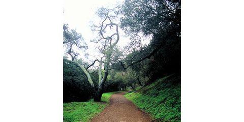 Nature, Vegetation, Green, Natural landscape, Plant community, Leaf, Soil, Trail, Shrub, Trunk,