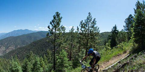 Bicycle wheel, Bicycle frame, Sky, Mountain bike, Mountain biking, Sports equipment, Bicycle wheel rim, Downhill mountain biking, Bicycle, Plant community,
