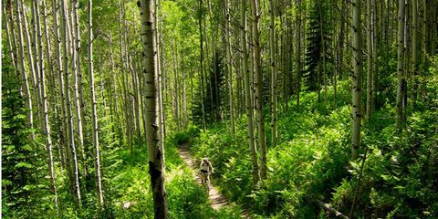 Vegetation, Nature, Natural environment, Green, Natural landscape, Plant community, Nature reserve, Forest, Old-growth forest, Grove,