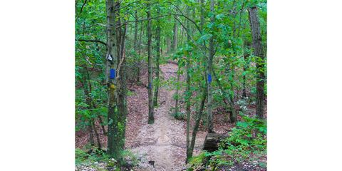 Vegetation, Nature, Green, Natural environment, Branch, Leaf, Plant community, Trail, Nature reserve, Soil,