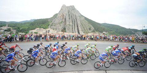 Bike Snob's Tour de France plan