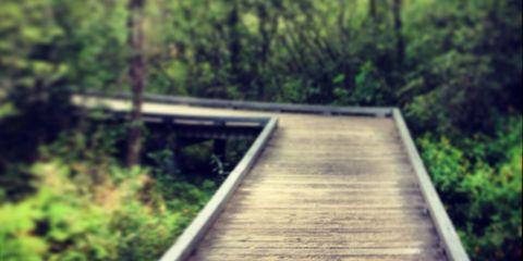 Wood, Natural landscape, Walkway, Nature reserve, Boardwalk, Sunlight, Parallel, Bridge, Path, Log bridge,