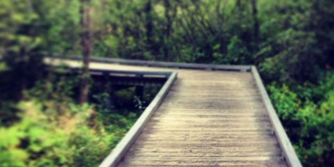 Wood, Vegetation, Nature, Natural landscape, Walkway, Nature reserve, Boardwalk, Parallel, Bridge, Path,