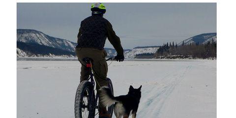 Winter, Dog breed, Dog, Shoe, Carnivore, Bicycle wheel, Bicycle wheel rim, Bicycle, Freezing, Bicycle tire,