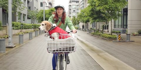 A Filmed by Bike movie still of a cyclist riding with a dog