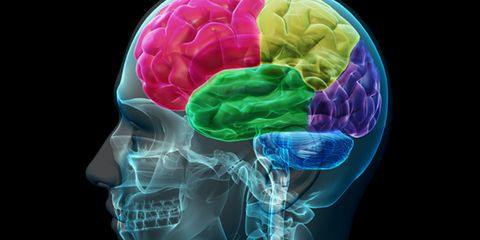 Brain: Exercising after the age of 40 promotes mental sharpness