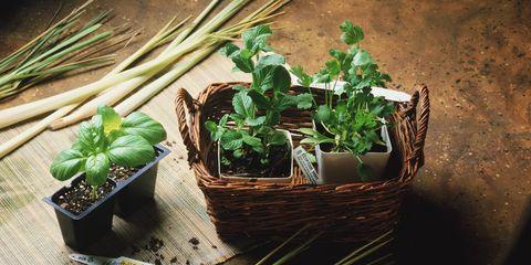 Flowerpot, Interior design, Houseplant, Herb, Whole food, Basket, Leaf vegetable, Natural foods, Annual plant, Storage basket,