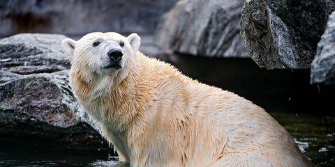 Body of water, Nature, Daytime, Liquid, Fluid, Polar bear, Vertebrate, Organism, Water resources, Bear,
