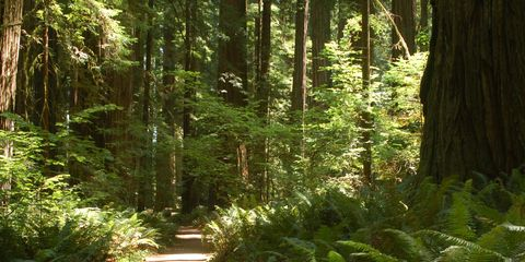 Vegetation, Nature, Natural environment, Plant, Plant community, Leaf, Forest, Old-growth forest, Nature reserve, Ecoregion,