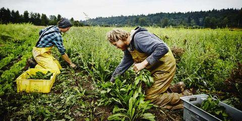 human waste on produce