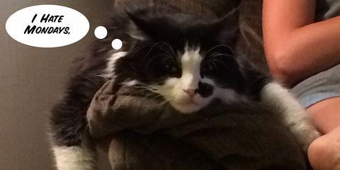 Human, Small to medium-sized cats, Felidae, Vertebrate, Cat, Comfort, Carnivore, Whiskers, Sitting, Fur,