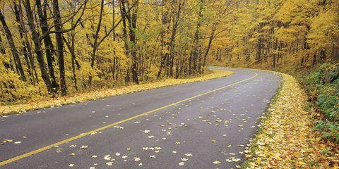 Deciduous, Yellow, Branch, Leaf, Natural landscape, Road, Road surface, Asphalt, Autumn, Sunlight,