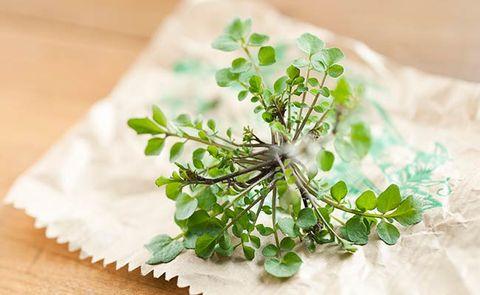 medicinal plants for skin