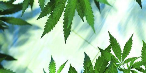 Daytime, Green, Leaf, Woody plant, Light, Botany, Terrestrial plant, Annual plant, Plant stem, Weed,
