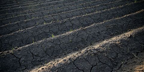 foods affected by california drought