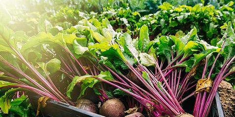 health beneftis of beets