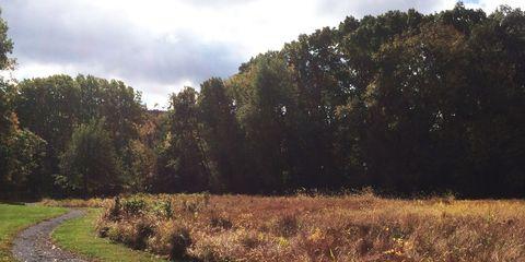 Vegetation, Nature, Natural landscape, Road, Plant community, Leaf, Shrub, Trail, Sunlight, Forest,