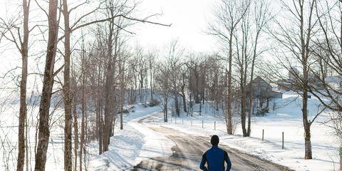 Winter, Branch, Tree, Freezing, Snow, Trail, Pedestrian, Walking, Path, Frost,