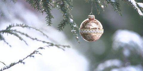 Branch, Christmas decoration, Christmas ornament, World, Holiday ornament, Ornament, Sphere, Twig, Christmas, Ball,