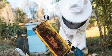 Georgia Gould: Beekeeper