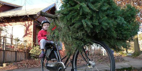 Little boy on bike carrying Christmas tree