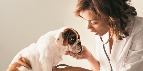 Save Money on Pet Costs