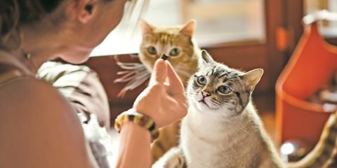 Supplements For Pets
