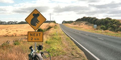 Koala crossing sign with bicycles in Australia