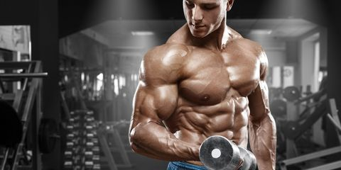 bicep muscle fibers