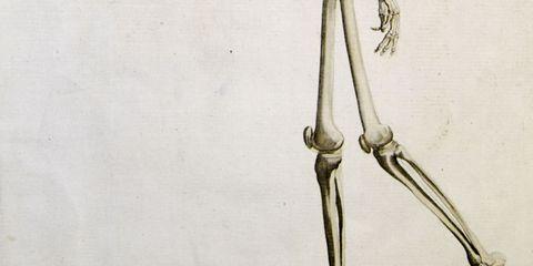 Foot bones.