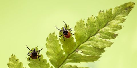 truth about lyme disease