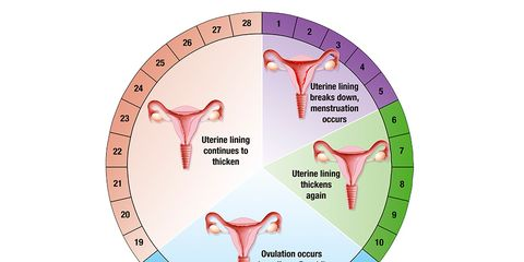 menstrual cycle diet