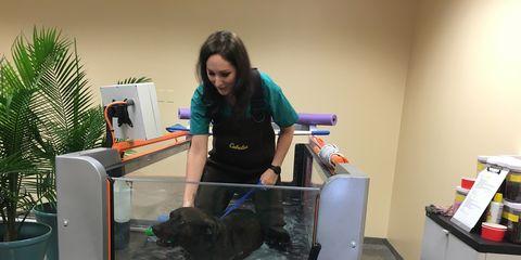 dog uses underwater treadmill