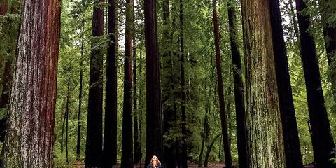 forest bathing