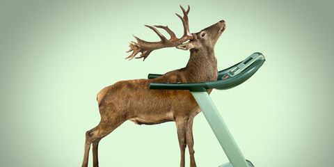 deer breaks into golds gym