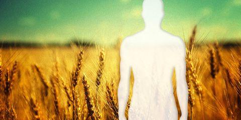 gluten free wheat field