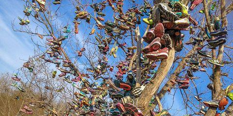 Shoe tree in Terre Haute