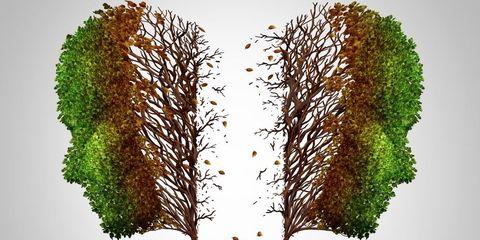 Trees growing apart
