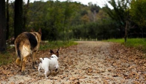 5 love lessons you can learn from dogs