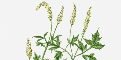 Flowering plant, Botany, Plant stem, Annual plant, Herbaceous plant, Subshrub, Herb, Perennial plant, Pedicel,