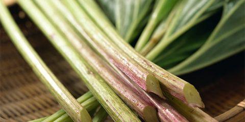 Green, Leaf, Ingredient, Botany, Photography, Close-up, Produce, Whole food, Conifer, Allium,