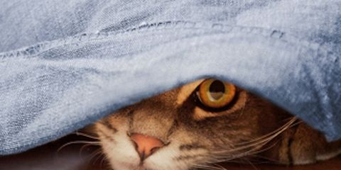 Whiskers, Felidae, Small to medium-sized cats, Cat, Carnivore, Iris, Snout, Photography, Fur, Close-up,
