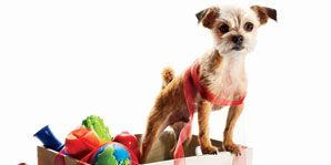 These chew toys will keep your pet happy and healthy