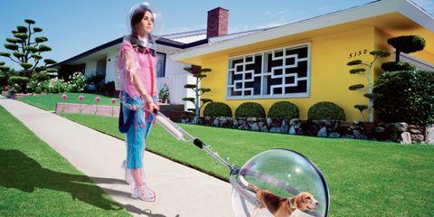 Grass, House, Garden, Lawn, Carnivore, Ball, Home, Yard, Backyard, Sunglasses,
